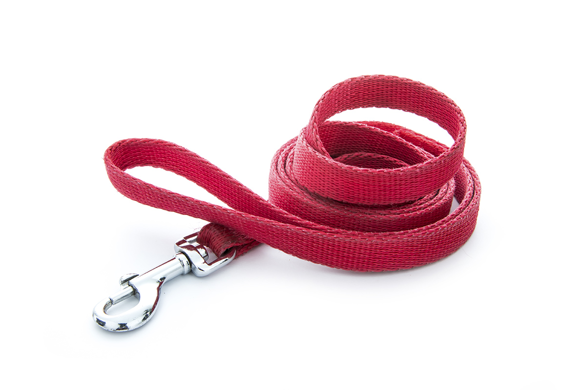 red dog lead stock photo